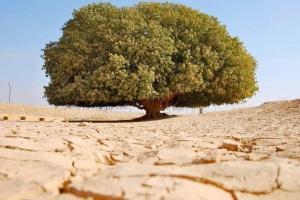 Contoh tanah yang telah kekeringan