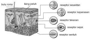 receptor types